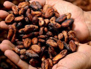Masło kakaowe – ulga dla skóry suchej i zniszczonej
